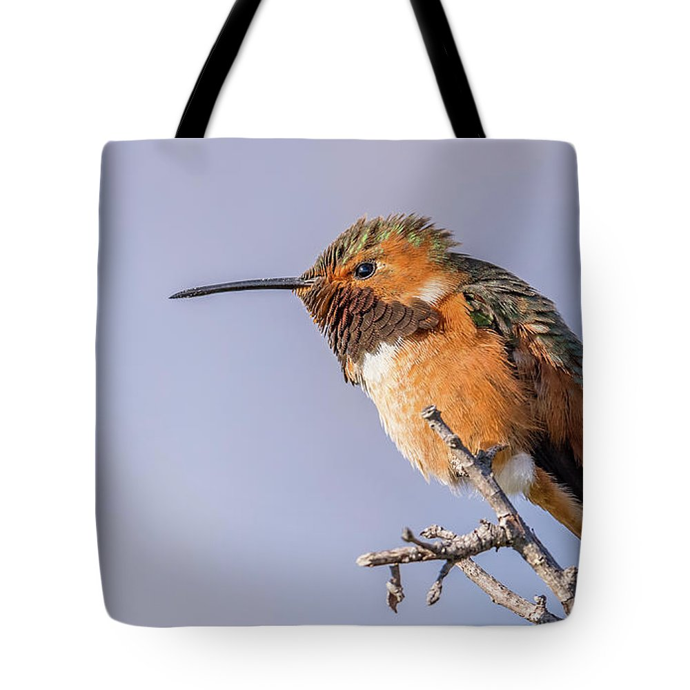 Allen's Hummingbird Perched Tote Bag featuring the photograph Allen's Hummingbird Perched by Morris Finkelstein