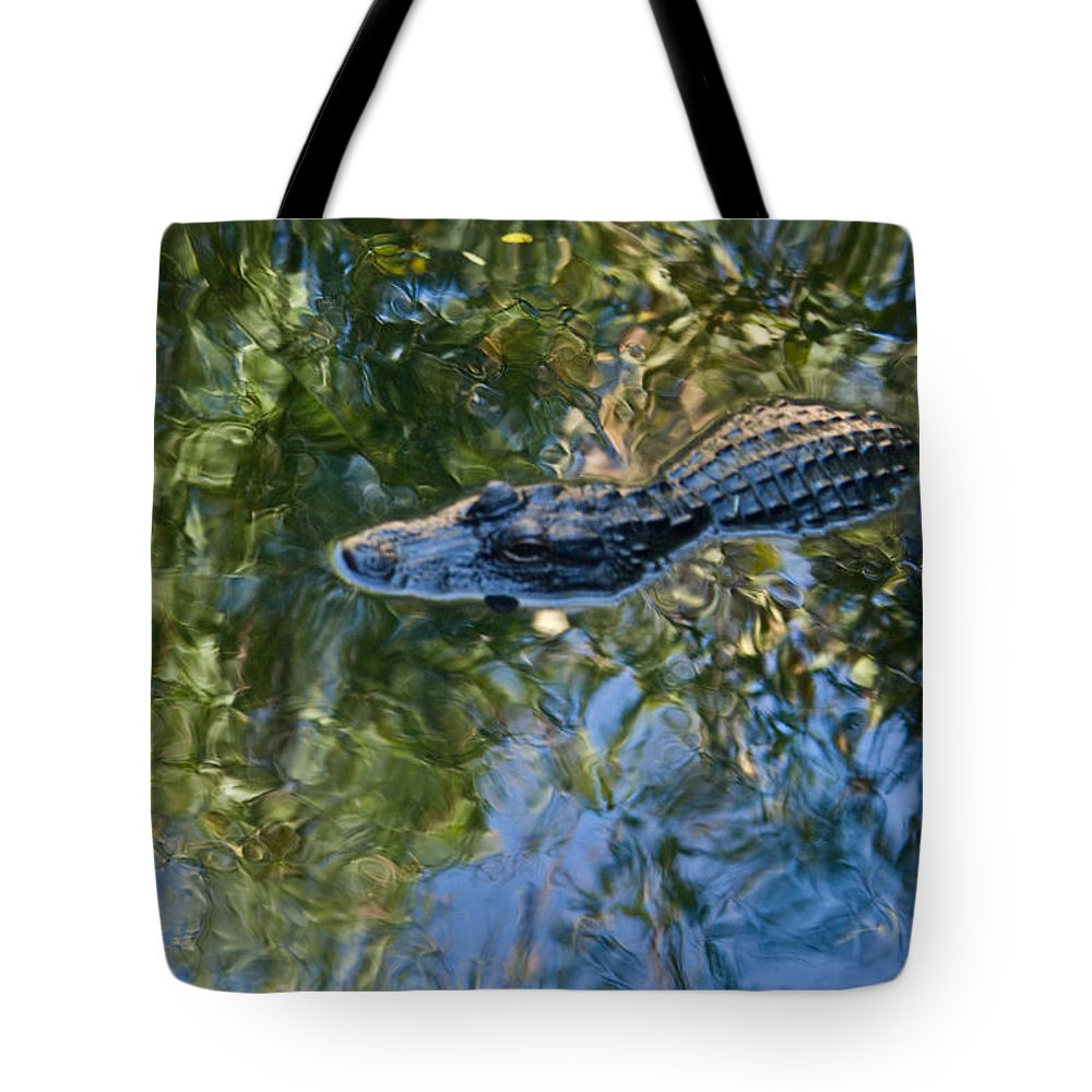 Alligator Tote Bag featuring the photograph Alligator Stalking by Douglas Barnett