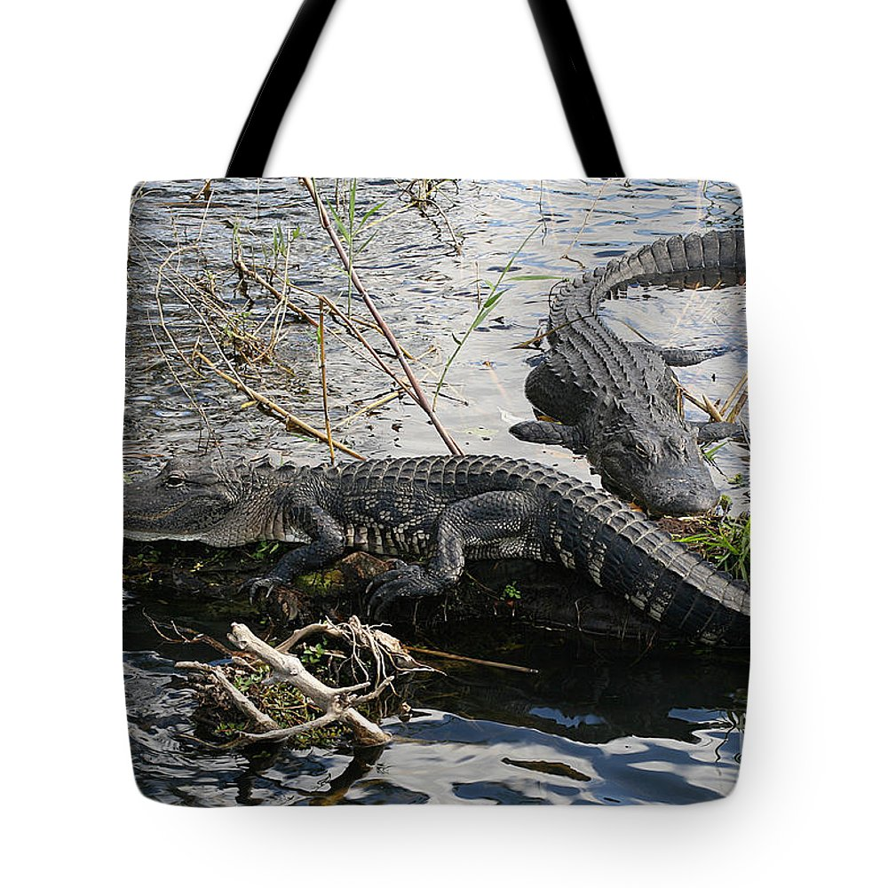 Alligator Tote Bag featuring the photograph Alligators In An Everglades Swamp by Max Allen