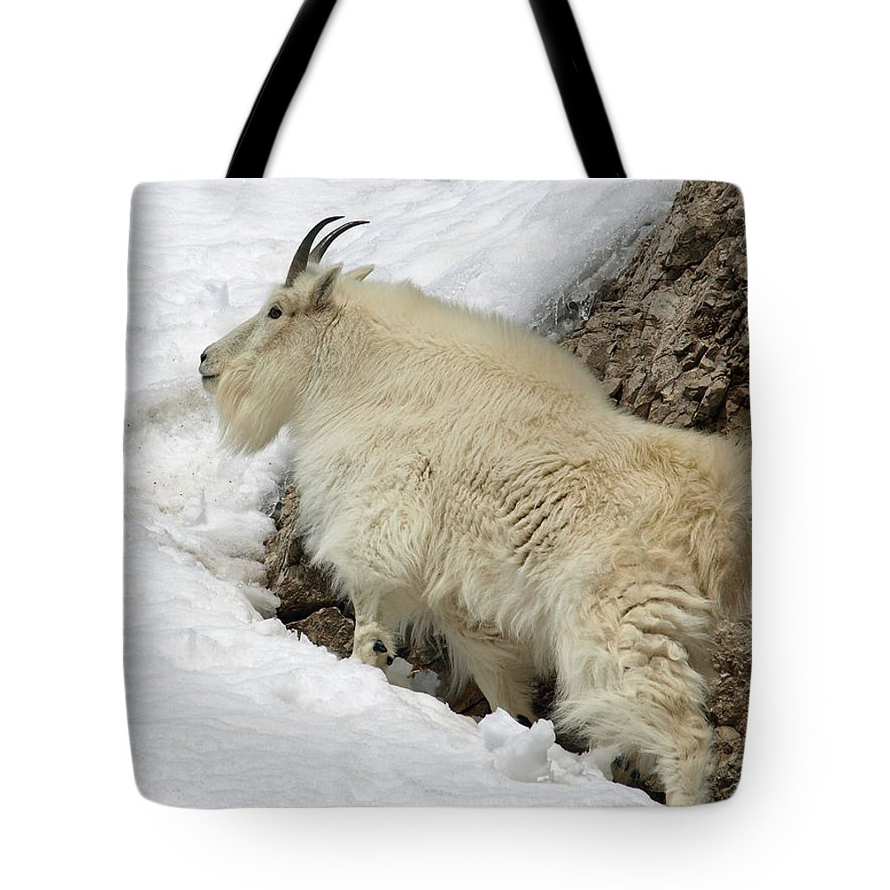 Animals Tote Bag featuring the photograph Along The Rock by DeeLon Merritt
