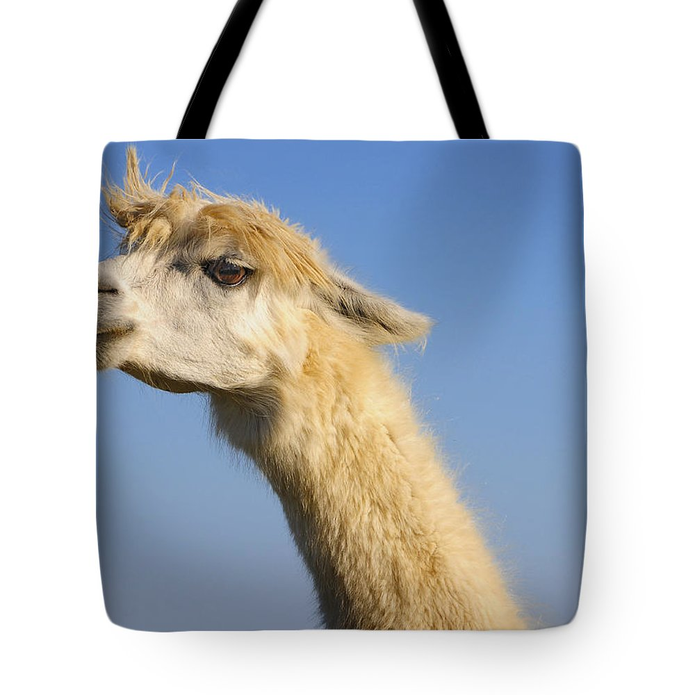 Skip Hunt Tote Bag featuring the photograph Alpaca by Skip Hunt