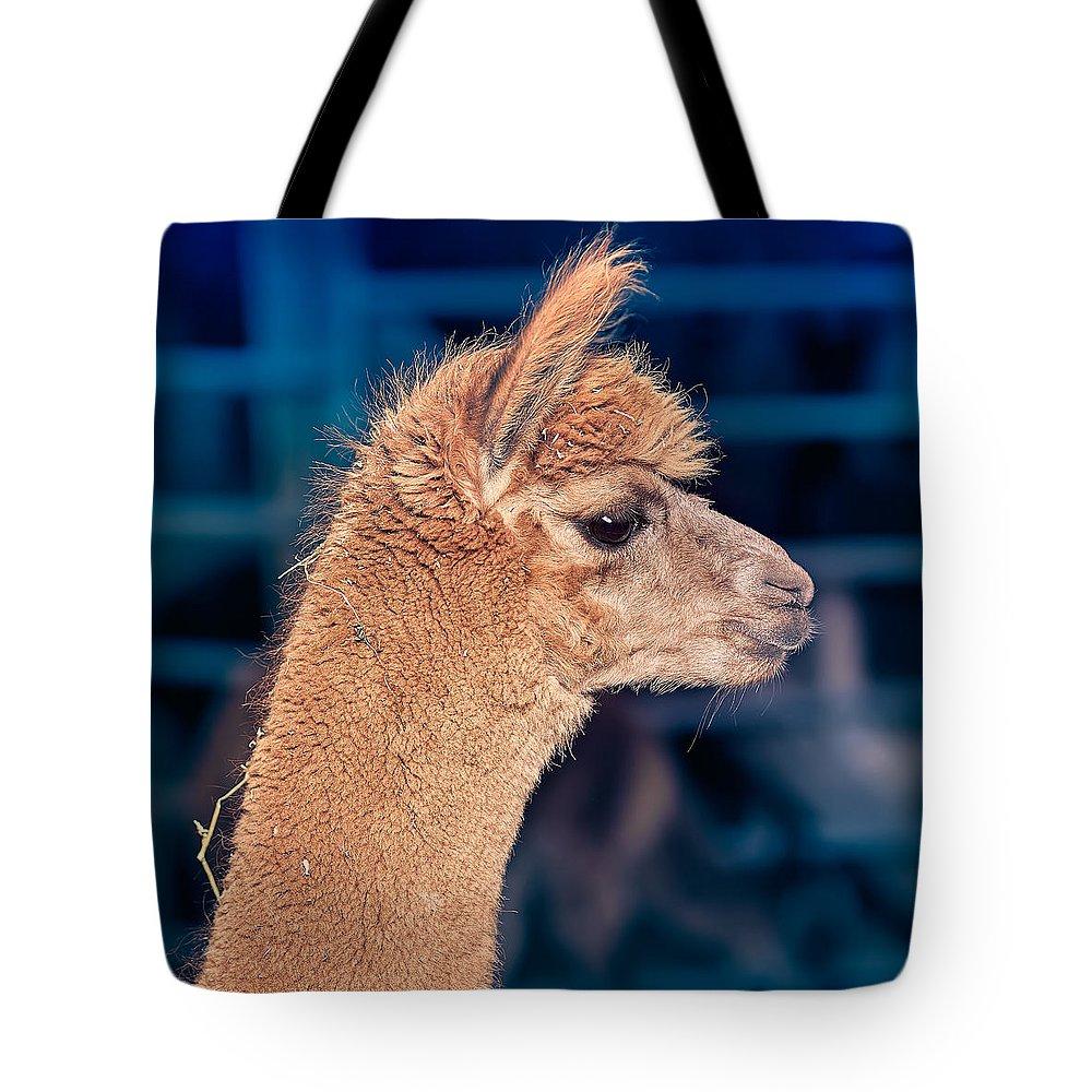 Alpaca Tote Bag featuring the photograph Alpaca Wants To Meet You by TC Morgan