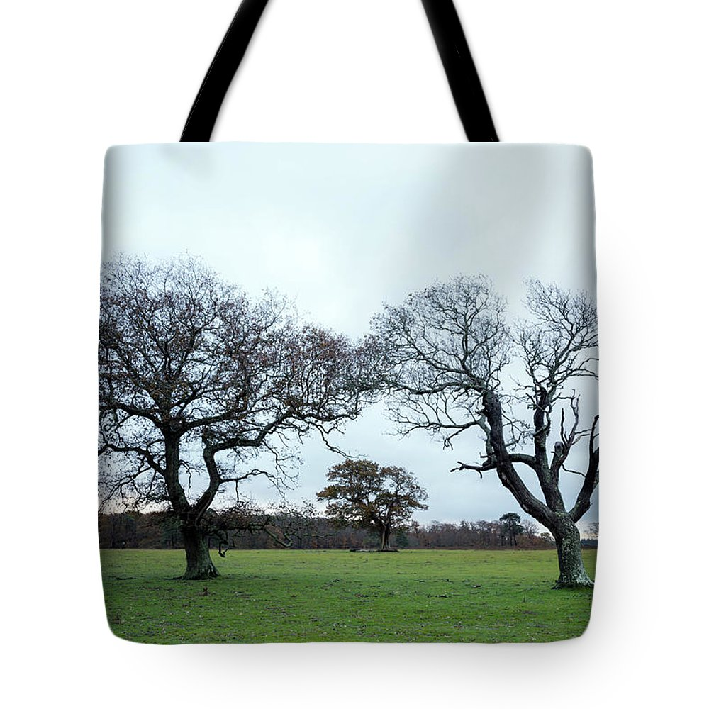 Svetlana Sewell Tote Bag featuring the photograph Always Together by Svetlana Sewell