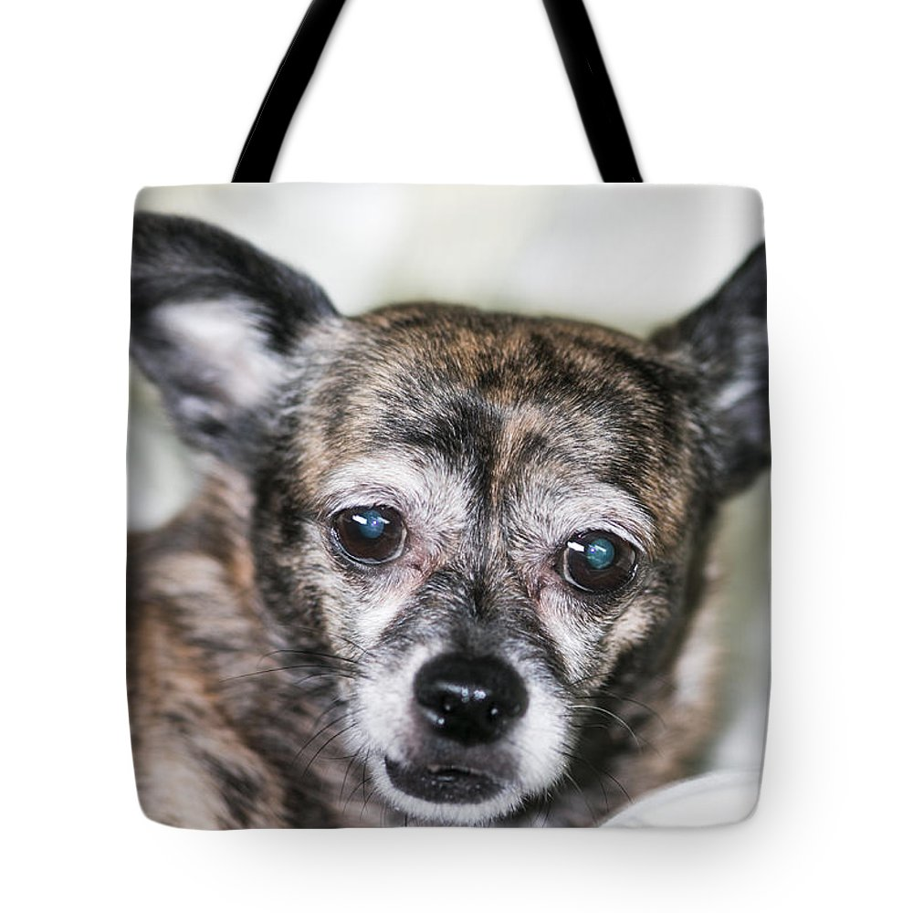 Chihuahuas Tote Bag featuring the photograph Am I Adopted by Jim Markiewicz