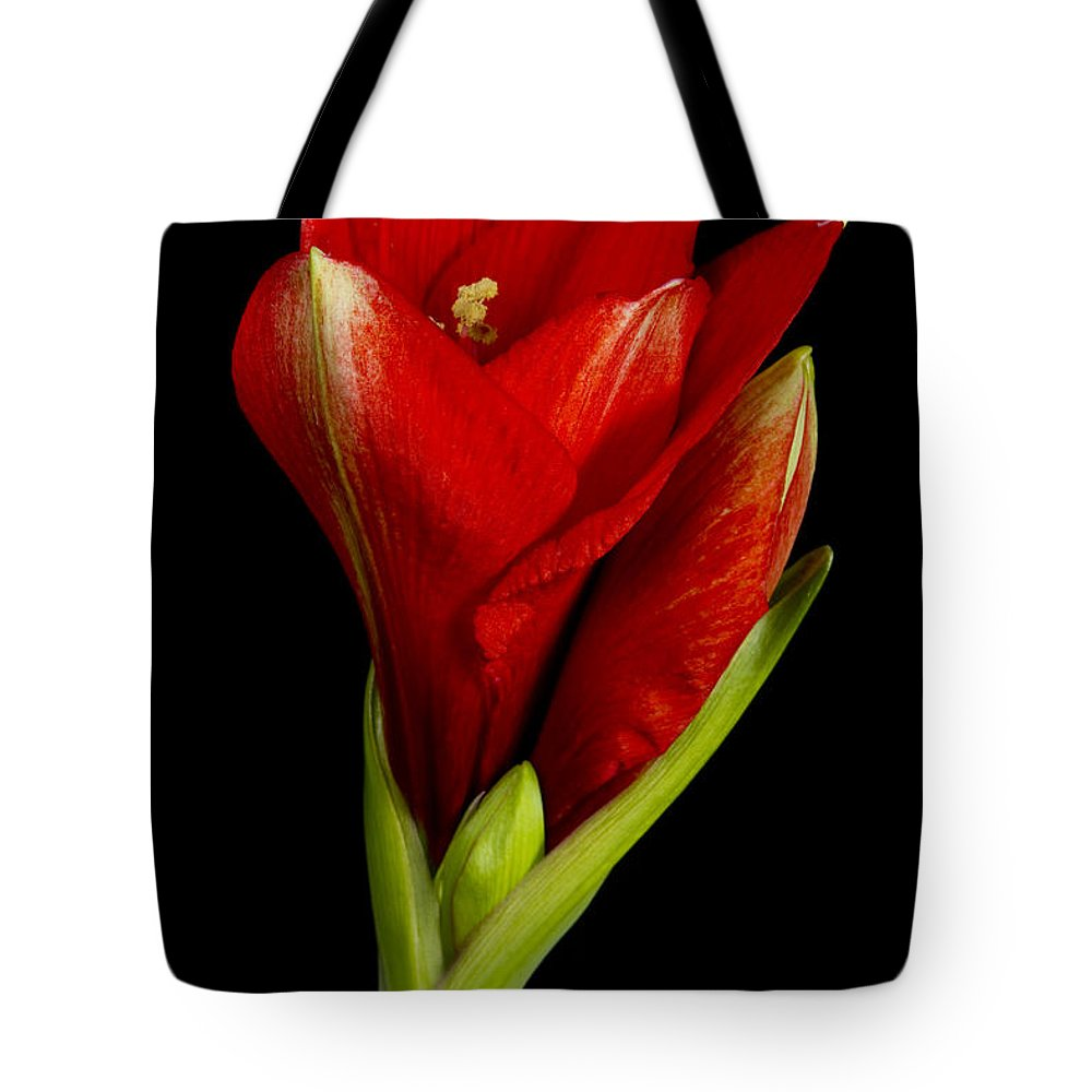 Amaryllis Tote Bag featuring the photograph Amaryllis 12-23-2010 by James BO Insogna