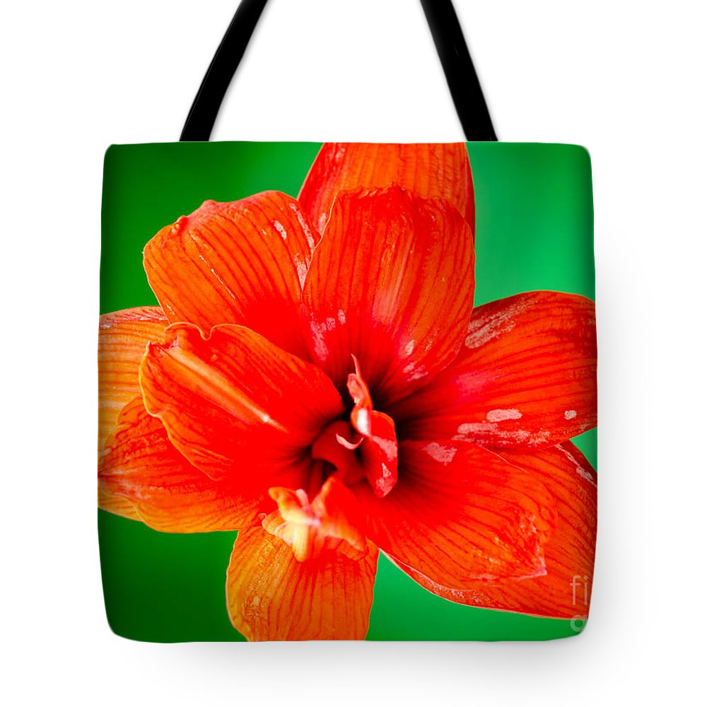 Amaryllis Tote Bag featuring the photograph Amaryllis Contrast Orange Amaryllis Flower Appearing To Float Above A Deep Green Background by Andy Smy