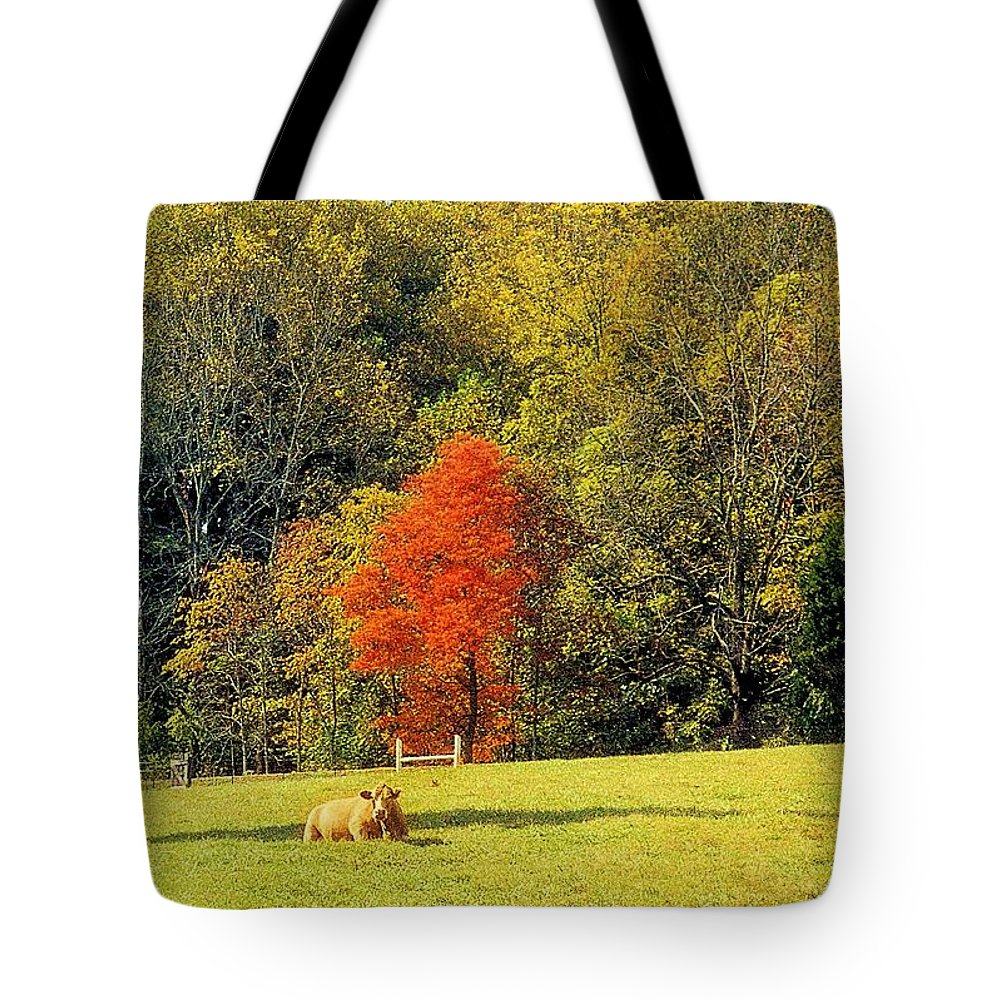 Landscapes Tote Bag featuring the photograph Amber Light by Jan Amiss Photography