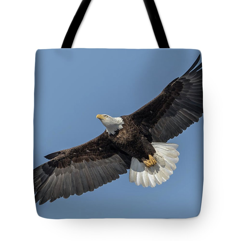American Bald Eagle Tote Bag featuring the photograph American Bald Eagle 2017-18 by Thomas Young