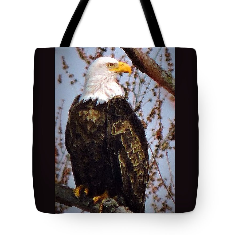 American Tote Bag featuring the photograph American Bald Eagle - Iowa by Peg Donnellan