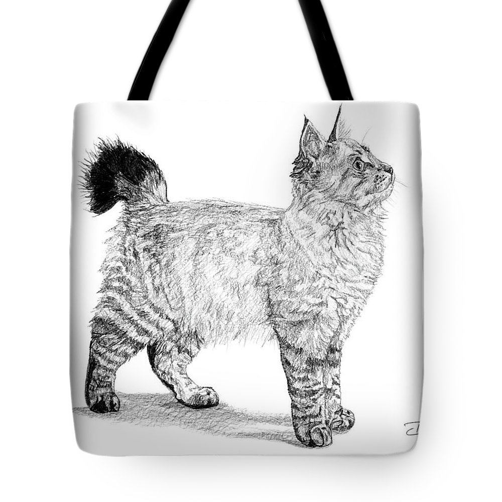 American Bobtail Cat Black And White