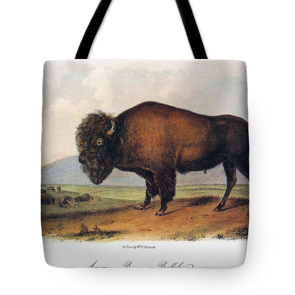 1846 Tote Bag featuring the photograph American Buffalo, 1846 by John James Audubon