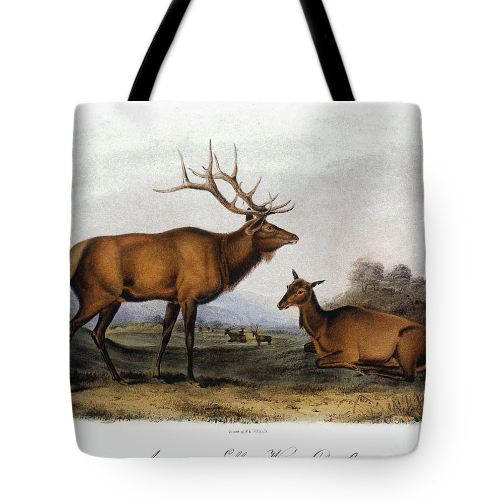 1846 Tote Bag featuring the photograph American Elk, 1846 by Granger