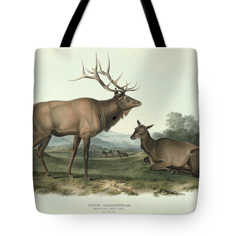 Cervus Canadensis (american Elk Tote Bag featuring the painting American Elk by John James Audubon