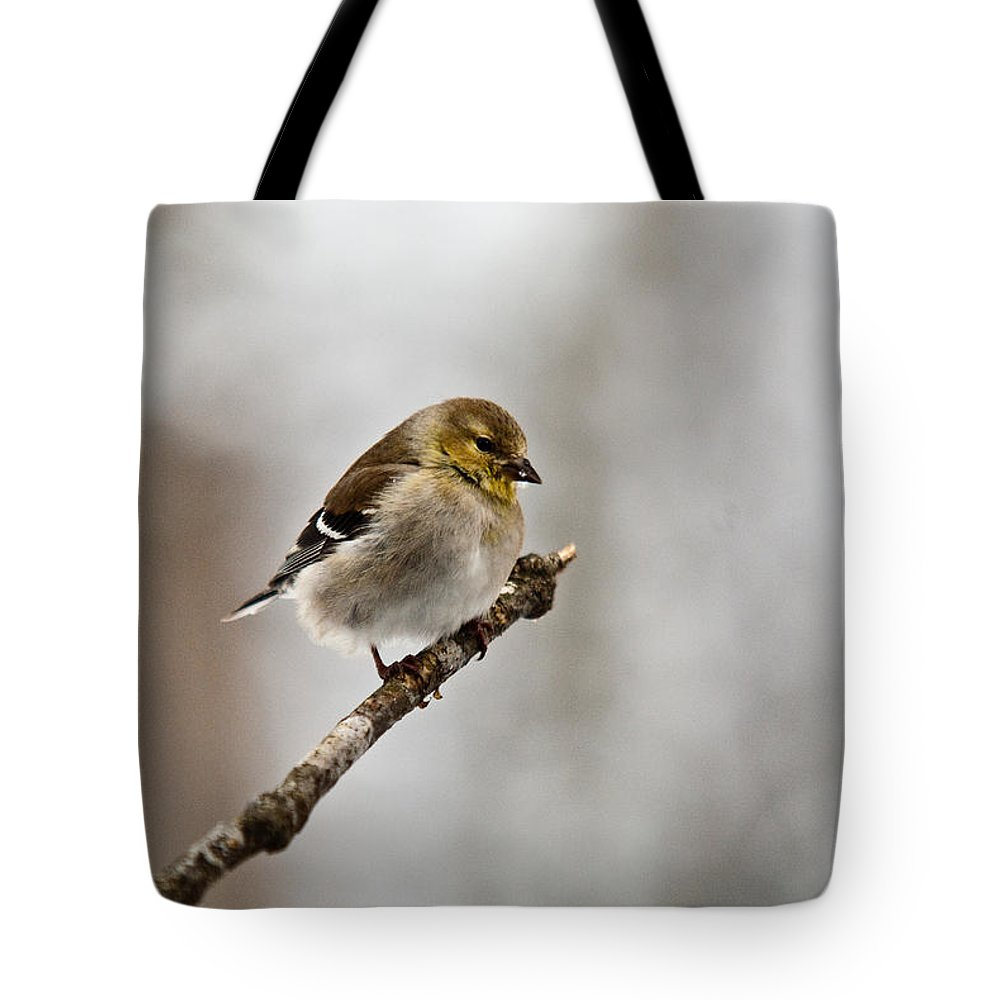 Cove Tote Bag featuring the photograph American Golden Finch Winter Plumage 1 by Douglas Barnett