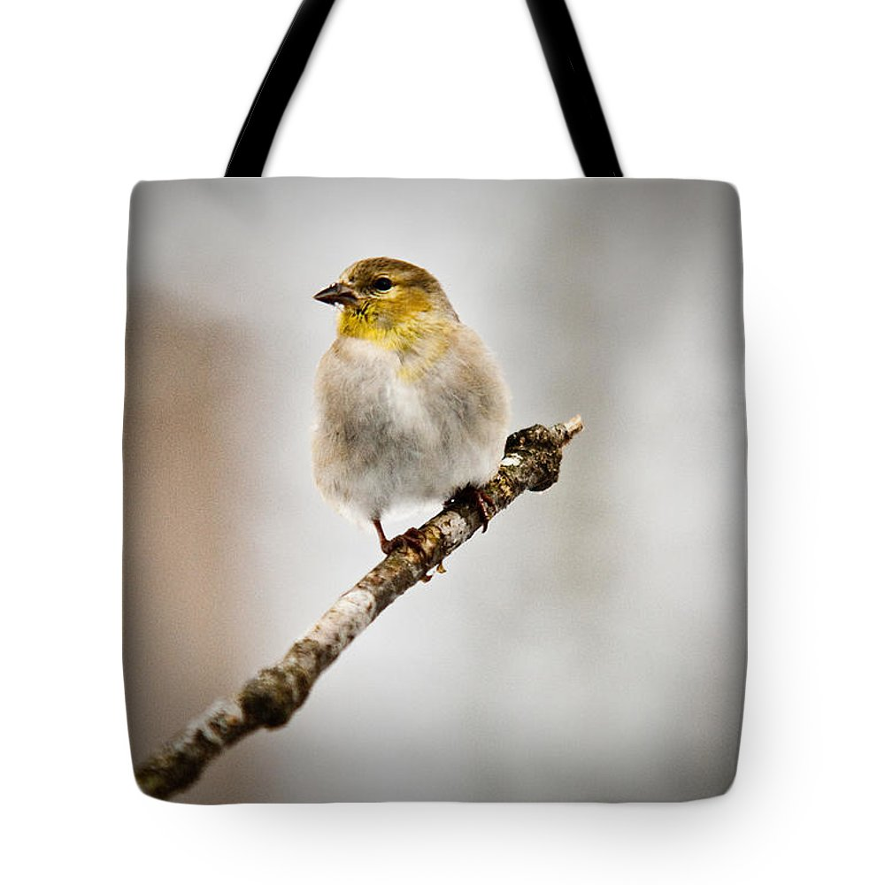 Cove Tote Bag featuring the photograph American Golden Finch Winter Plumage 6 by Douglas Barnett
