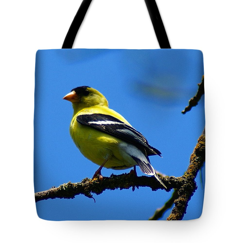 Birds Tote Bag featuring the photograph American Goldfinch 1 by Ben Upham III