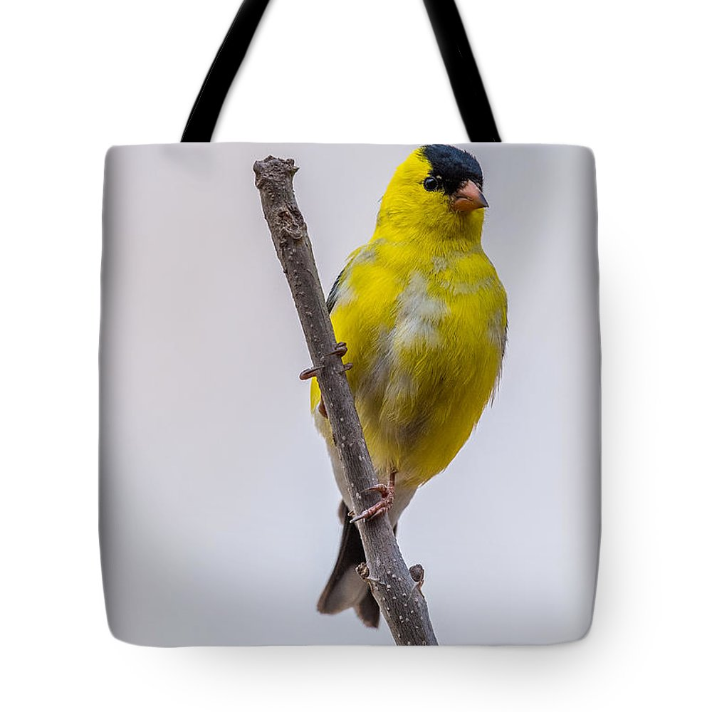 Male Tote Bag featuring the photograph American Goldfinch Front by Paul Freidlund