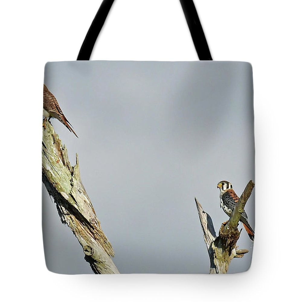 Tote Bag featuring the photograph American Kestrel by Liz Grindstaff