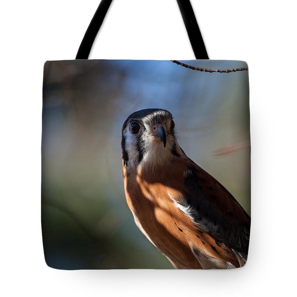 American Kestrel Tote Bag featuring the photograph American Kestrel by Robert Shields