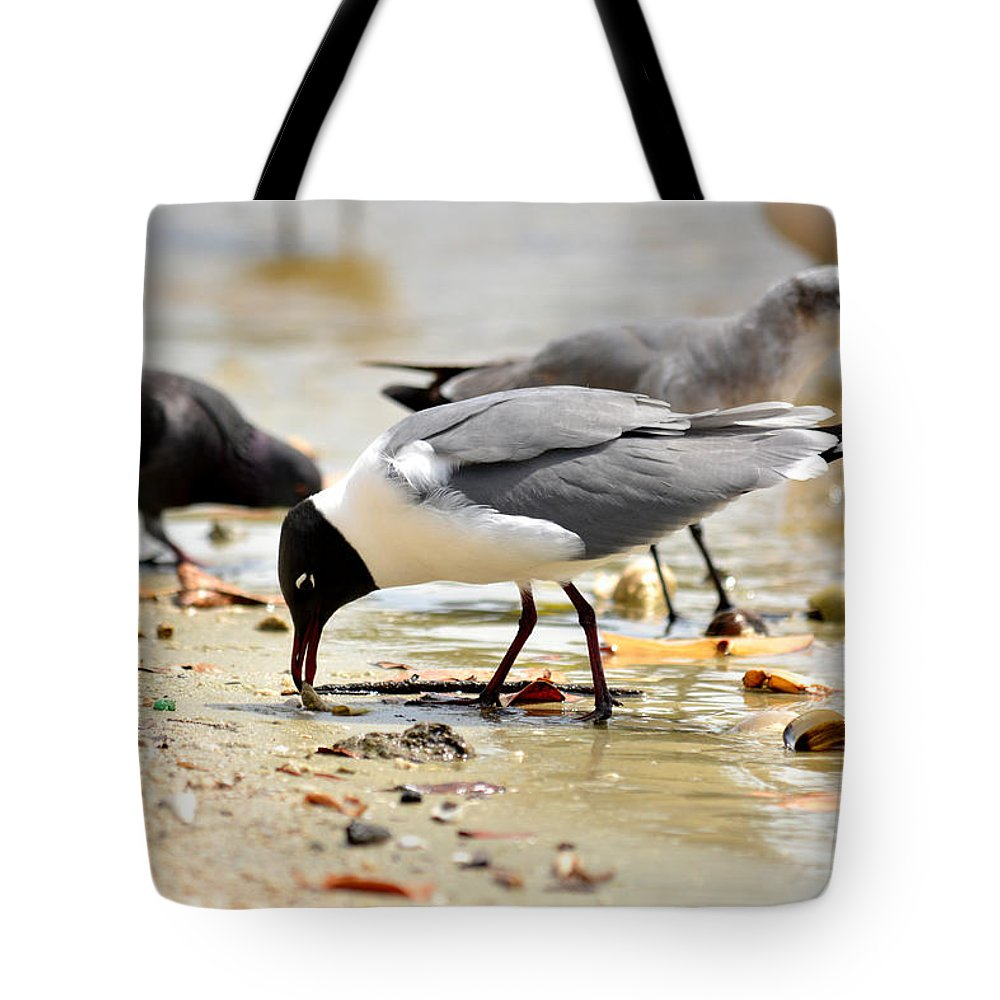 American-oyster-catcher Tote Bag featuring the photograph American Oyster Catcher by Reva Steenbergen