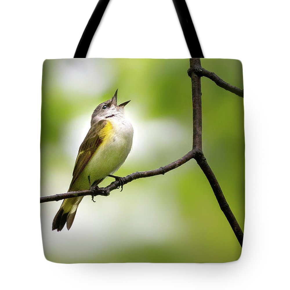 American Redstart Tote Bag featuring the photograph American Redstart Female 2 by Bill Wakeley