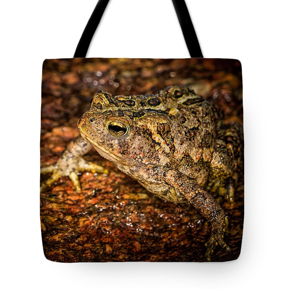 Animals Tote Bag featuring the photograph American Toad by Rikk Flohr