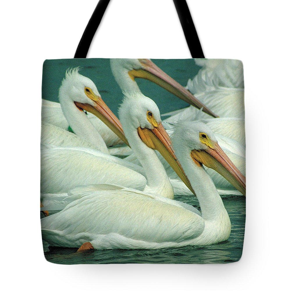 White Pelicans Tote Bag featuring the photograph American White Pelicans by Bruce Morrison