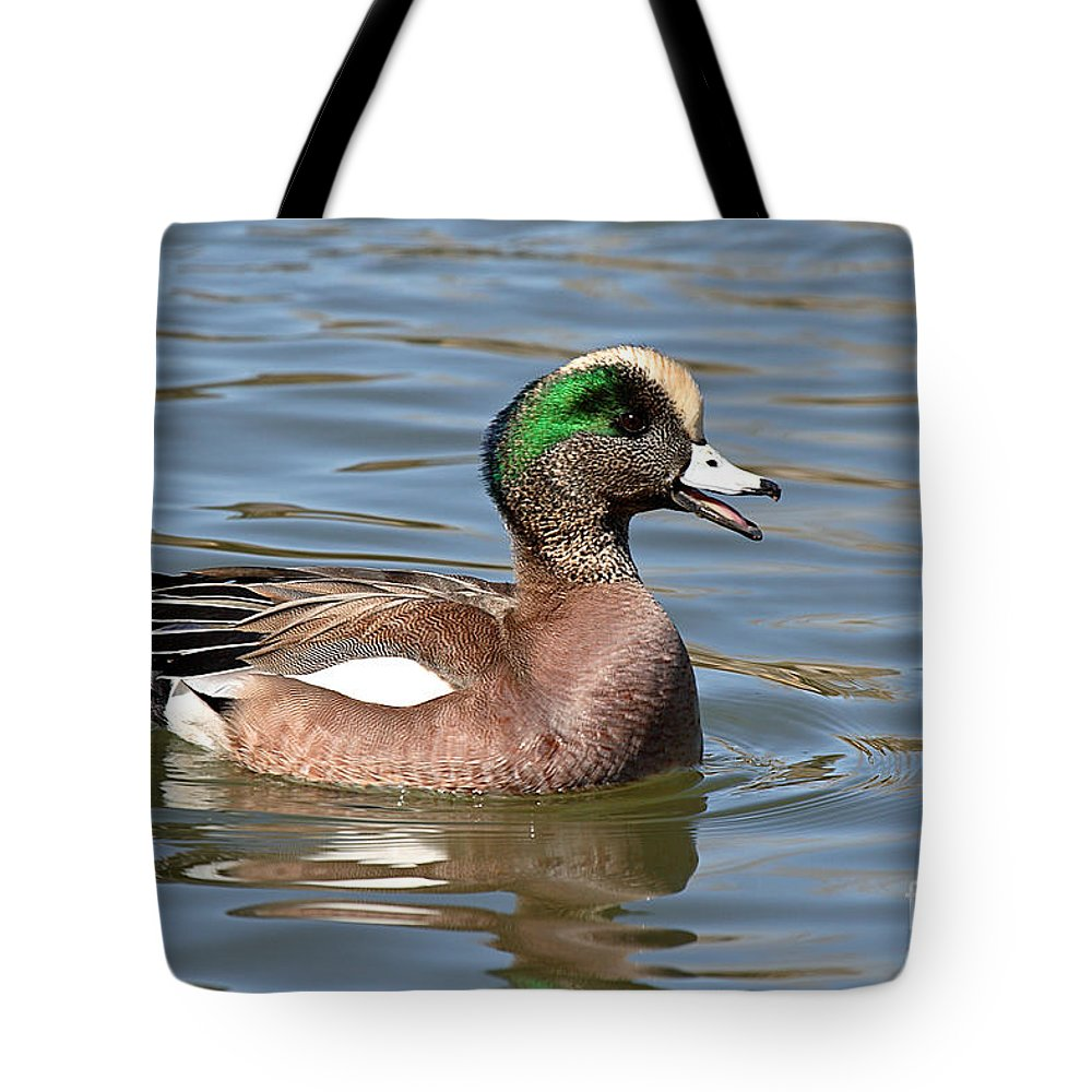 Widgeon Tote Bag featuring the photograph American Widgeon Calling From The Water by Max Allen