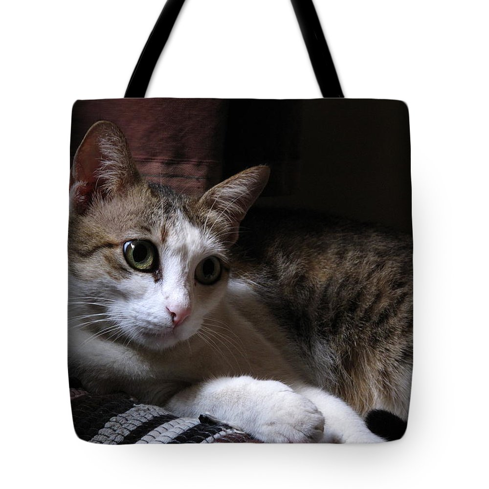 Ammani My Pet Cat Tote Bag featuring the pyrography Ammani The Cat by Asha Sudhaker Shenoy