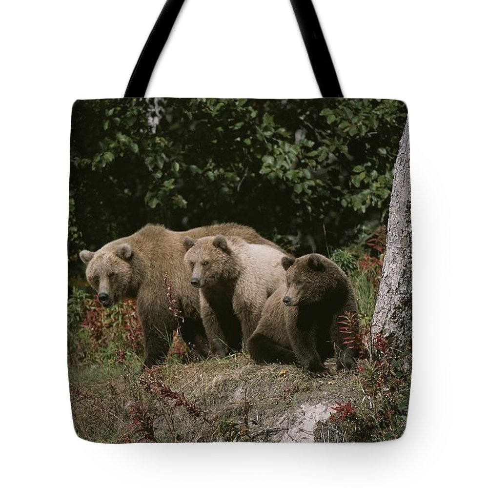 North America Tote Bag featuring the photograph An Alaskan Brown Bear And Her Cubs by Roy Toft