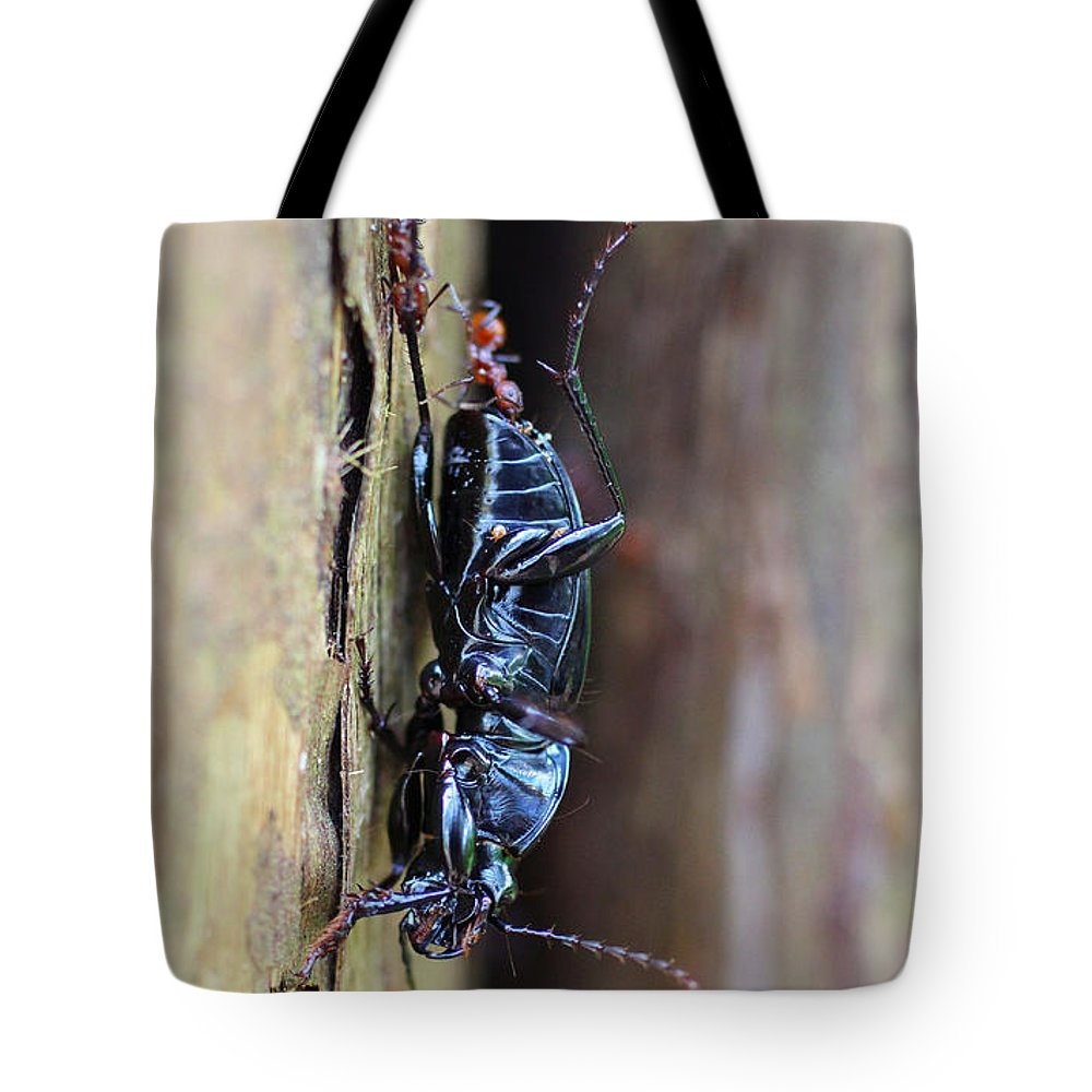 Insects Tote Bag featuring the photograph An Ant's Haul by Jennifer Churchman