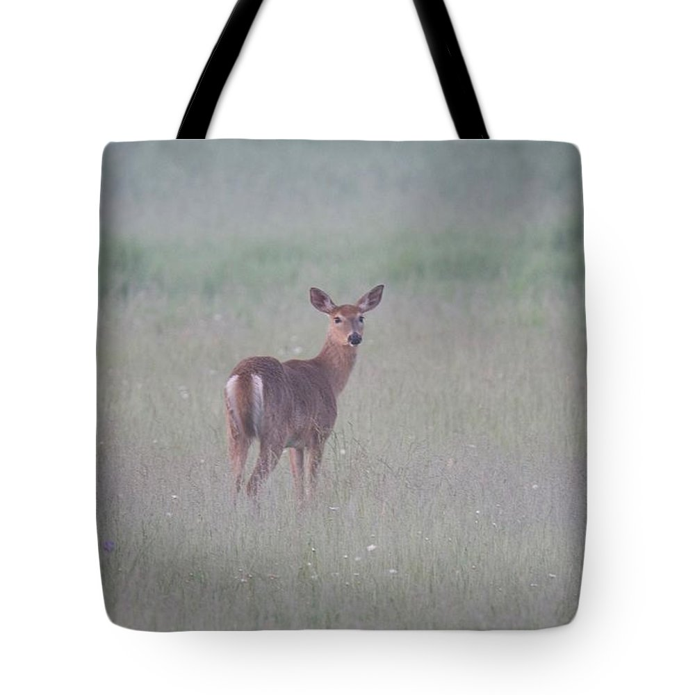 Deer Tote Bag featuring the photograph An Early Summer Morning by Michael Peychich