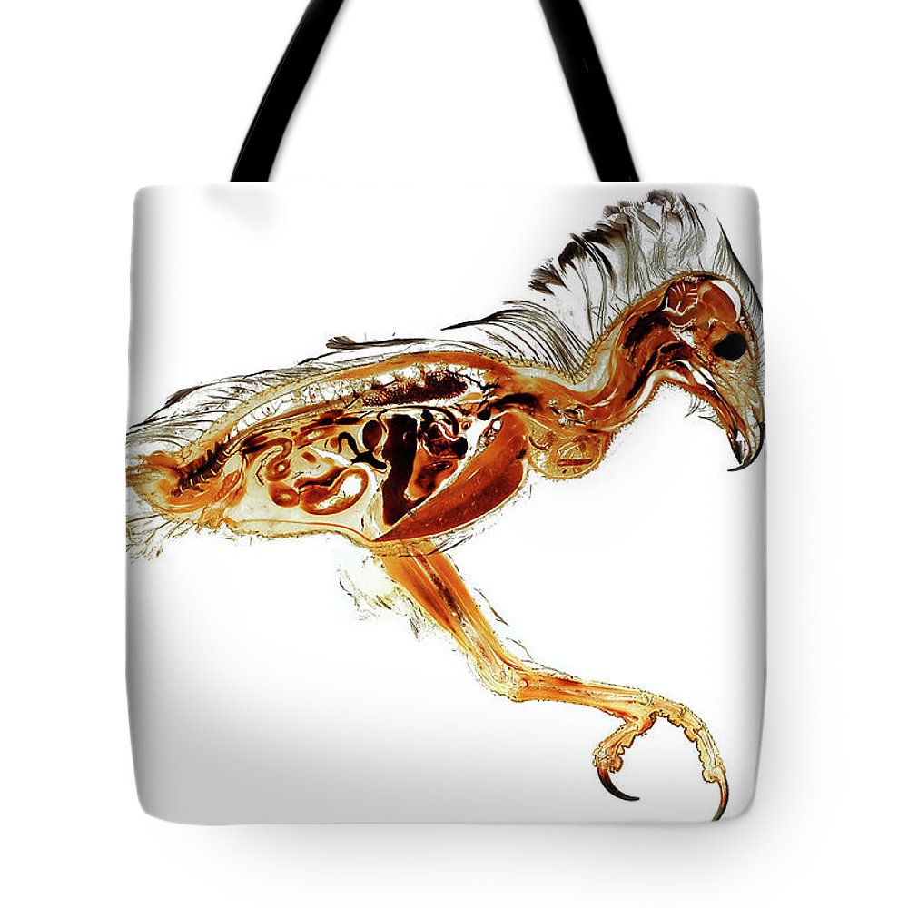 Anatomy Tote Bag featuring the photograph Anatomical Plastination Specimen Of A Honey Buzzard by Christoph Von Horst