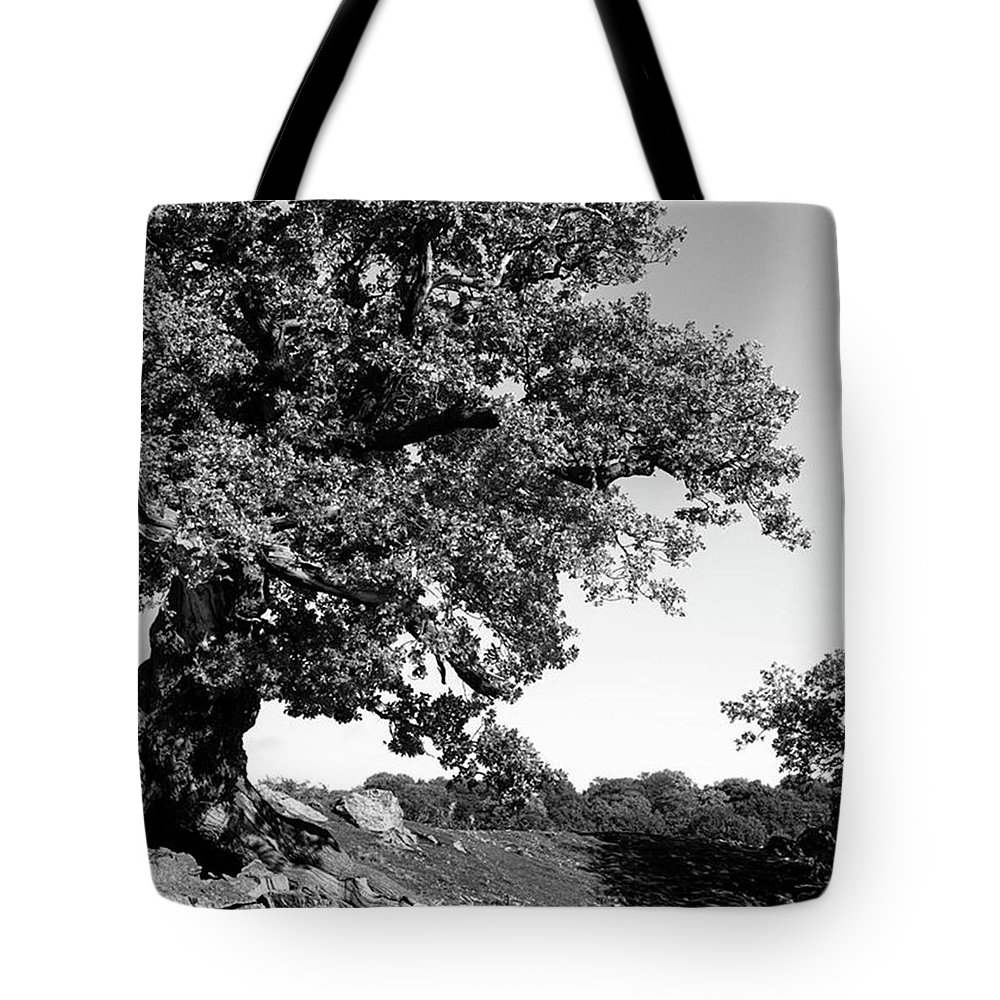 Woodland Tote Bag featuring the photograph Ancient Oak, Bradgate Park by John Edwards