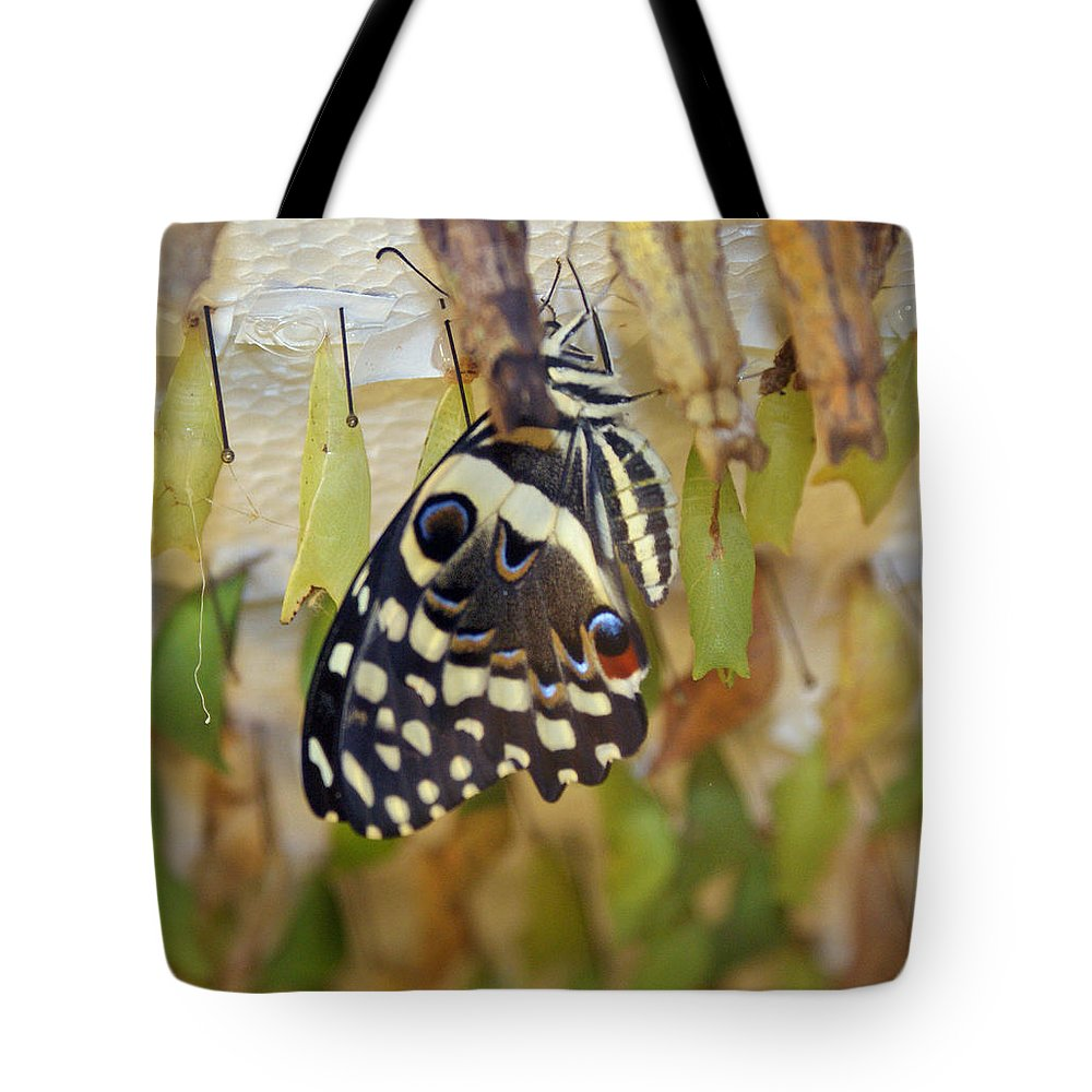Butterfly Tote Bag featuring the photograph And Life Begins by Shelley Jones