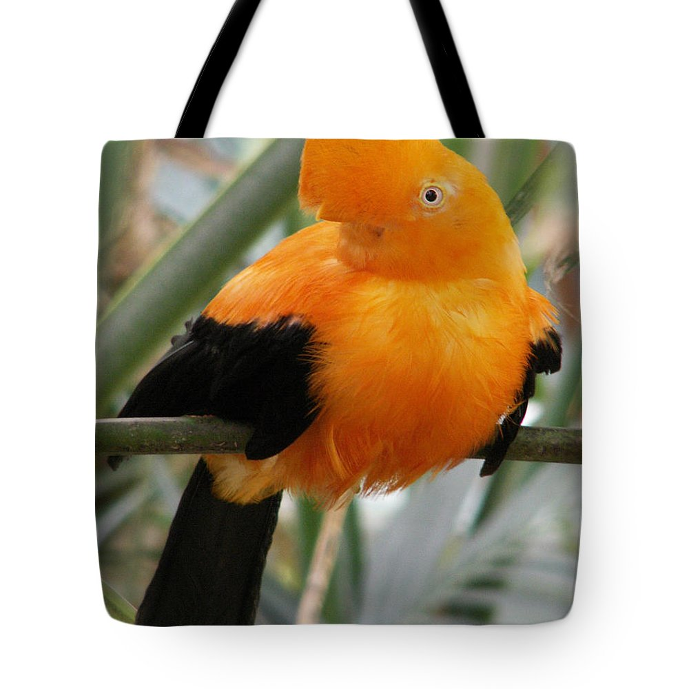 Bird Tote Bag featuring the photograph Andean Cock Of The Rock by Amy Fose