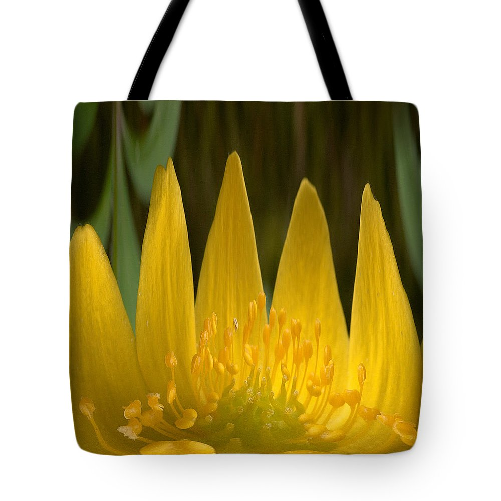 Lehtokukka Tote Bag featuring the photograph Anemone Flames by Jouko Lehto