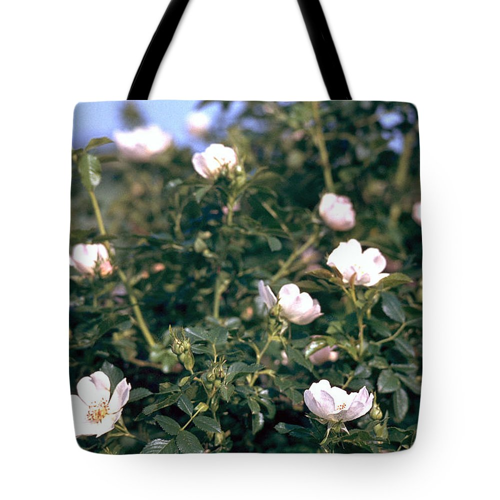 Anemone Tote Bag featuring the photograph Anemone by Flavia Westerwelle