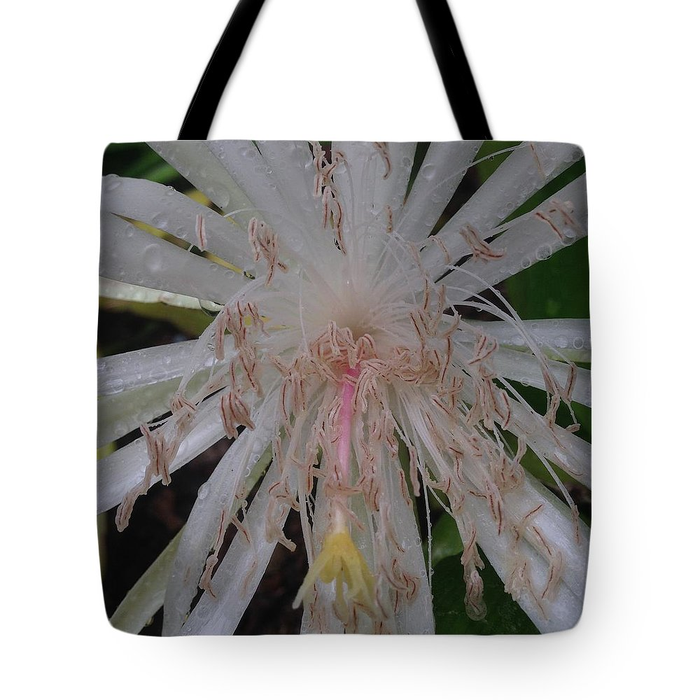 Cactus Flower Culebra West Indies Angels Tears Tote Bag featuring the photograph Angels Tears by Sarah Horton