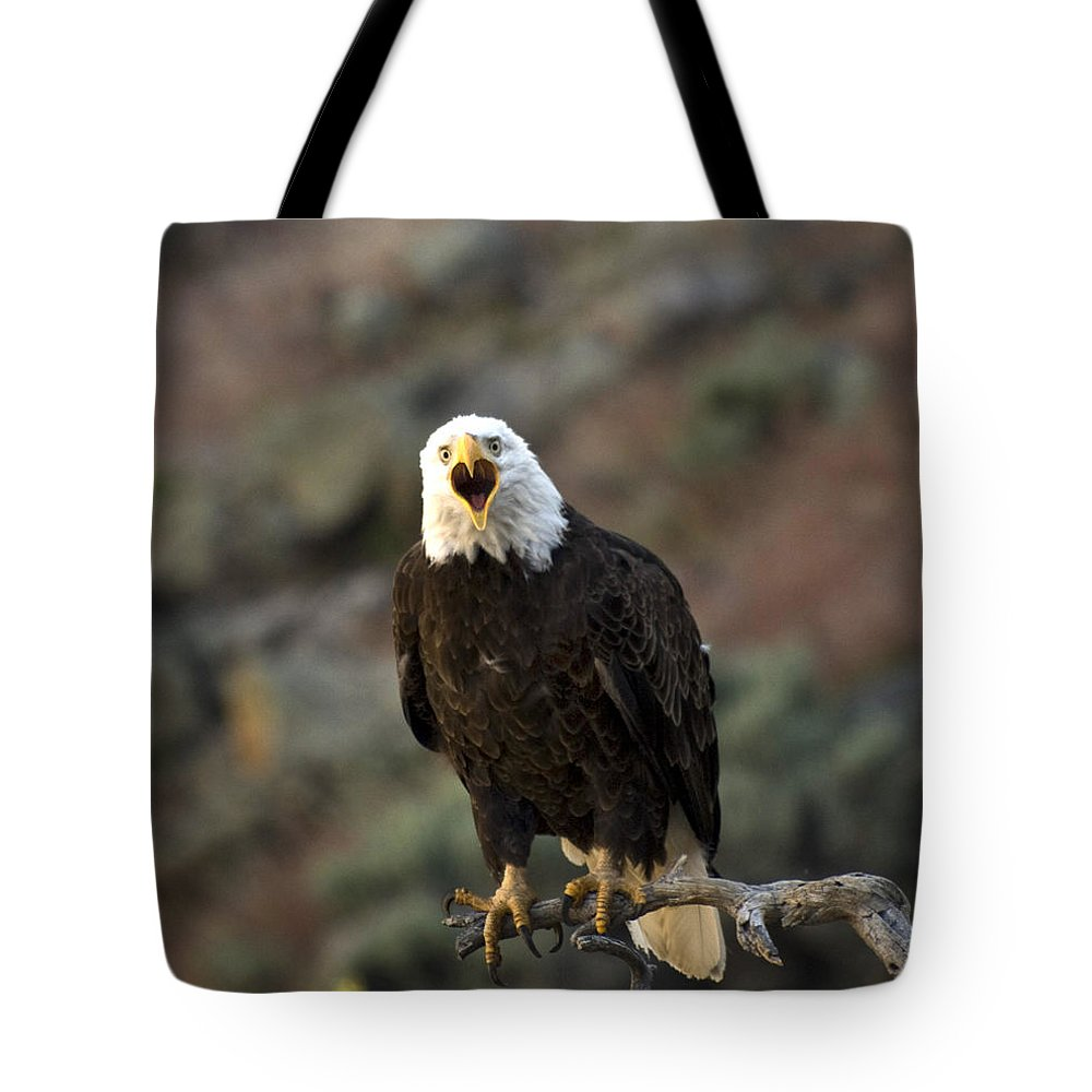 Bald Eagle Tote Bag featuring the photograph Angry Bald Eagle by Linda Weyers