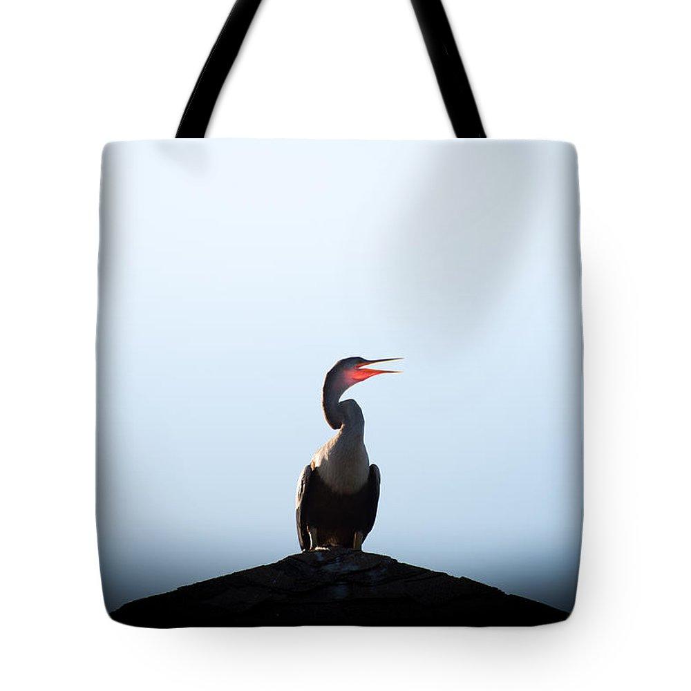 Anhinga Photographs Tote Bags