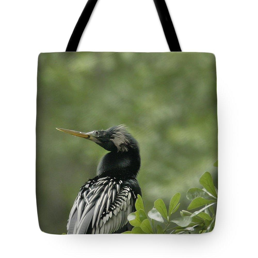 Anhinga Tote Bag featuring the photograph Anhinga by Phill Doherty