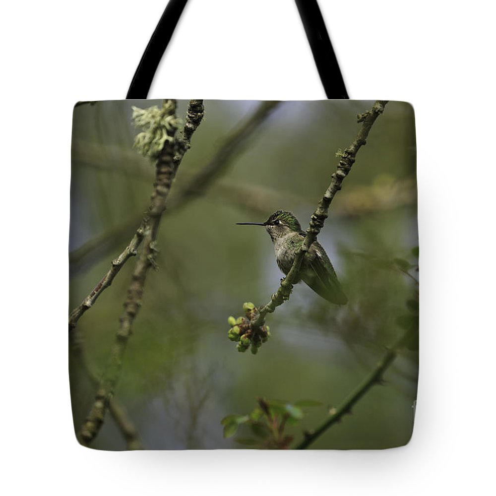 Hummingbird Tote Bag featuring the photograph Anna's Hummingbird by Tim Hauf