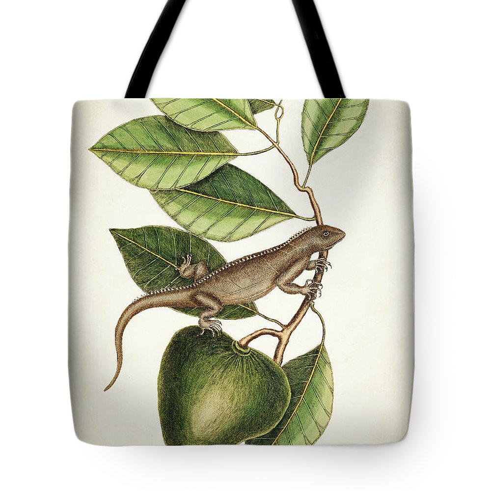 Botanical Tote Bag featuring the digital art Anona Maxima Botanical by Aged Pixel