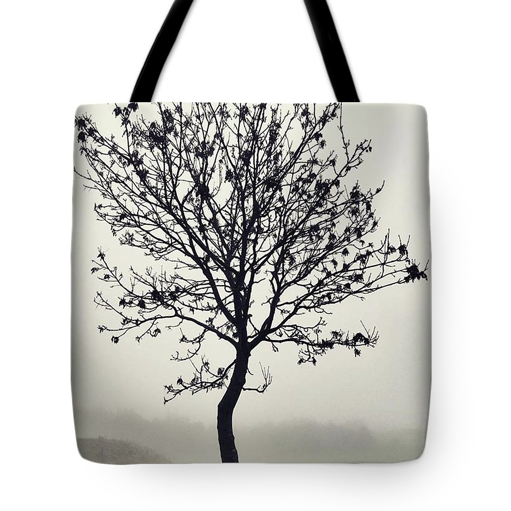 Tree Tote Bag featuring the photograph Another Walk Through The by John Edwards