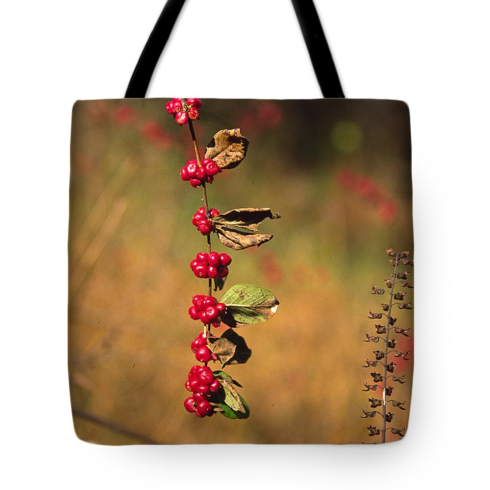 Fall Colors Tote Bag featuring the photograph Another Year by Randy Oberg