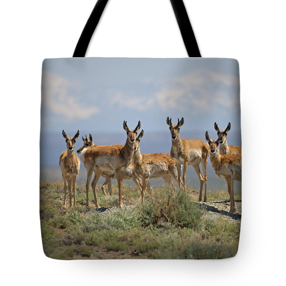 Antelope Tote Bag featuring the photograph Antelope by Heather Coen