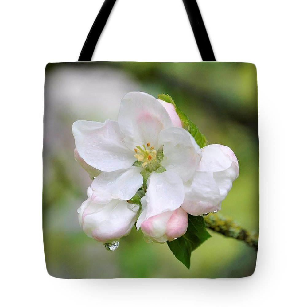 Apple Blossom Tote Bag featuring the photograph Apple Blossom by Sally Falkenhagen