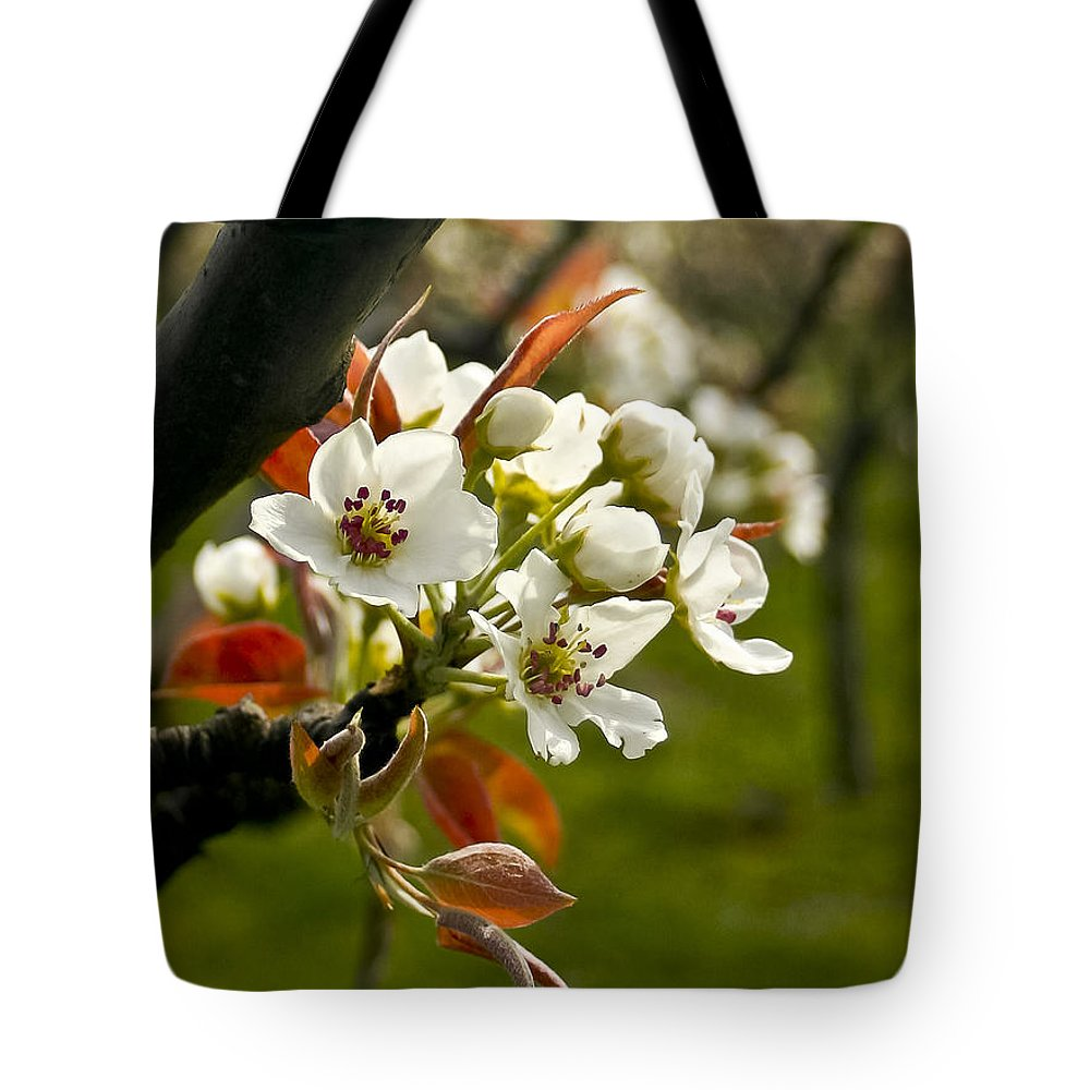 Flowers Tote Bag featuring the photograph Apple Blossoms by Albert Seger