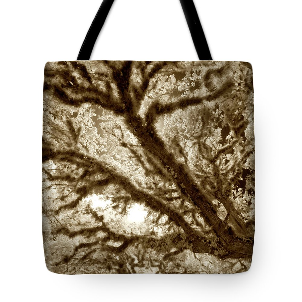 Trees Tote Bag featuring the photograph Arboreal Plateau 2 by Gary Bartoloni